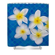 Frangipani Flowers In Water Shower Curtain