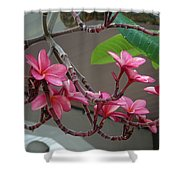 Frangipani Flowers Shower Curtain