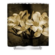 Frangipani In Sepia Shower Curtain