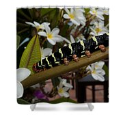 Frangipani Tree And Caterpillar Shower Curtain