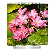 Frangipanis In Bloom Shower Curtain