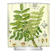 Frankincense Shower Curtain