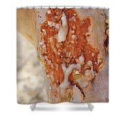Frankincense Sap Shower Curtain