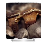 Fraternal Fungi Shower Curtain