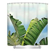 Frayed Palm Fronds Against Blue Sky Shower Curtain