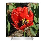 Frayed Tulip Shower Curtain
