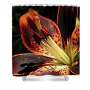 Freckled Forever Susan Lily Shower Curtain