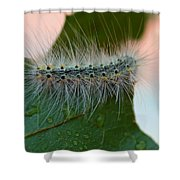 Fred II Shower Curtain