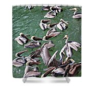 Free For All Shower Curtain