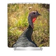 Free Range Turkey Shower Curtain