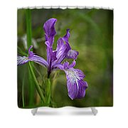 Free Ranging Wild Iris Shower Curtain
