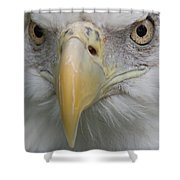 Freedom Eagle Shower Curtain