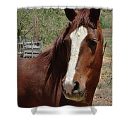 Freedom Horse Shower Curtain