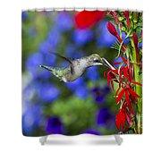 Freedom Hummingbird Shower Curtain