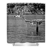 Freedom Is A Seagull Name Black And White Shower Curtain