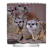 Freezing Meer Cats Shower Curtain