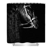 Freisian Shadow Shower Curtain