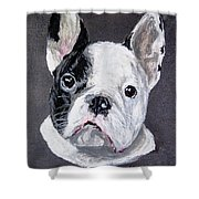 French Bulldog Close Up Shower Curtain