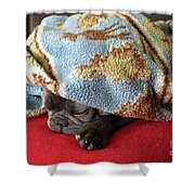 French Bulldog Naps Under A Blanket-1 Shower Curtain
