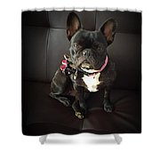 French Bulldog On The Couch Shower Curtain