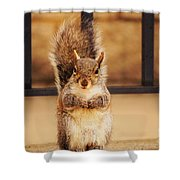 French Fry Eating Squirrel2 Shower Curtain