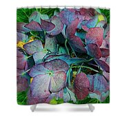 French Hydrangea Rainbow Shower Curtain