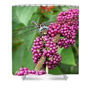 French Mulberry Shower Curtain