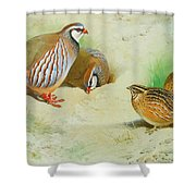 French Partridge By Thorburn Shower Curtain