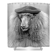 French Poodle Wearing Beret, C.1970s Shower Curtain