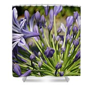 French Quarter Floral Shower Curtain