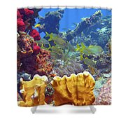 French Reef 1 Shower Curtain