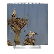 French Storks 01 Shower Curtain