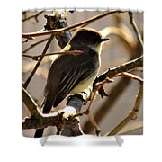 Frenchbroad Flycatcher Shower Curtain
