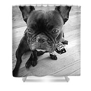 Frenchie Shower Curtain