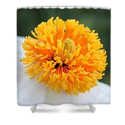 Frenzy Of Stamens Shower Curtain