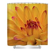 Fresh Dahlia Shower Curtain by Mary Jo Allen