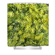 Fresh Dill Weed  Shower Curtain