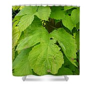 Fresh English Golden Hop Shower Curtain