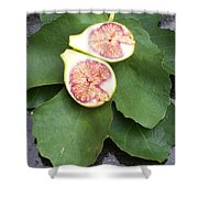 Fresh Figs Shower Curtain