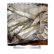 Fresh Fishes In A Market 3 Shower Curtain
