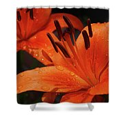 Fresh Floral Delight Shower Curtain