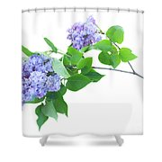 Lilac Twig Shower Curtain