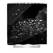 Fresh Morning Dew Shower Curtain