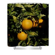 Fresh Oranges Shower Curtain