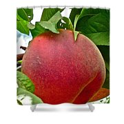 Fresh Peach Shower Curtain