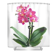 Fresh Pink Orchid In Pot Shower Curtain
