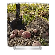Fresh Red Potatoes On Ground Shower Curtain