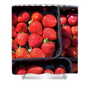 Fresh Ripe Strawberries In Plastic Boxes Shower Curtain