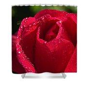 Fresh Rose Shower Curtain