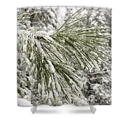 Fresh Snow Covers Needles On A Pine Shower Curtain